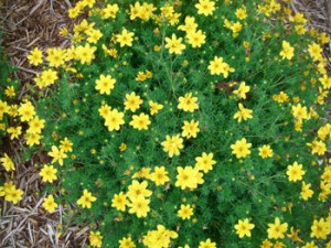 bidens Goldilock Rocks